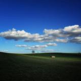 Pastoral Meadow