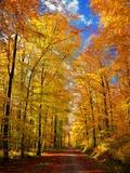 Chemin dorée Papier Photo par Philippe Sainte-Laudy
