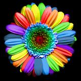 Rainbow Flower Papier Photo par Magda Indigo