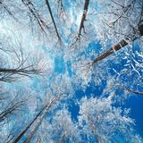 Ciel givré Papier Photo par Philippe Sainte-Laudy
