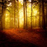 Odeur D'automne Papier Photo par Philippe Sainte-Laudy