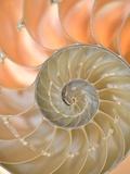 Shells 4 Papier Photo par Doug Chinnery