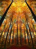 Temple d'automne Papier Photo par Philippe Sainte-Laudy
