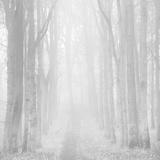 Morning Mists IIi Reproduction d'art par Doug Chinnery