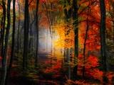 Lumières et couleurs Papier Photo par Philippe Sainte-Laudy