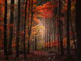 Bois naturel Papier Photo par Philippe Sainte-Laudy