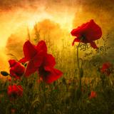 Rouge Beauté Papier Photo par Philippe Sainte-Laudy
