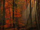 Poésie de couleur Papier Photo par Philippe Sainte-Laudy