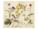 Wildflower composite