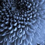 Big Blue Reproduction d'art par Doug Chinnery