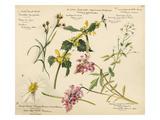 Wildflower composite plate no XVI