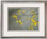 Yellow Autumnal Birch (Betula) Tree Limbs Against Gray Stucco Wall