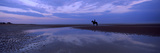 Silhouette of a Horse with Rider on the Beach at Dawn  Camber Sands  Camber  East Sussex  England