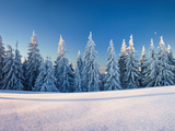 Snow Covered Trees on a Landscape  Belchen Mountain  Black Forest  Baden-Wurttemberg  Germany