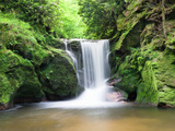 Water in a Forest  Geroldsau Waterfall  Black Forest  Baden-Wurttemberg  Germany