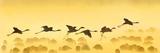 Flamingos Landing  Kenya
