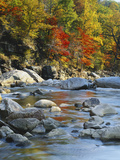 River Flowing Through Forest in Autumn  North Fork  Potomac State Forest  Maryland  USA
