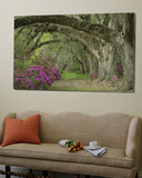Oak Trees Above Azaleas in Bloom, Magnolia Plantation, Near Charleston, South Carolina, USA Toile Murale Géante par Adam Jones