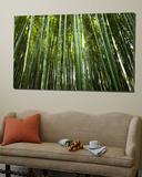 Bamboo Forest  Arashiyama-Sagano District
