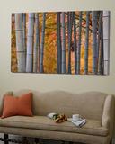Maples Trees and Bamboo, Arashiyama, Kyoto, Japan Toile Murale Géante par Gavin Hellier