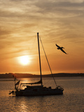 A Silhouetted Sailboat at Sunset and Flying Brown Pelican