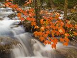Jordan's Stream Cascades Through a Woodland Near Park Loop Road