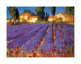 Late Afternoon  Lavender Fields