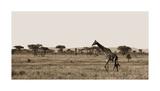 Serengeti Horizons II