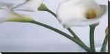 Springplicity I