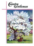 """Horses and Tree Blossoms "" Country Gentleman Cover  May 1  1940"