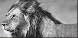 Le regard du lion Tableau sur toile par Xavier Ortega