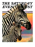 """Zebras "" Saturday Evening Post Cover  June 25  1932"