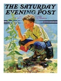 """Boy Botanist "" Saturday Evening Post Cover  August 27  1932"