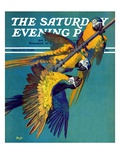 """""""Three Parrots """" Saturday Evening Post Cover  March 11  1939"""