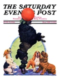 """Poodle Tricks "" Saturday Evening Post Cover  June 19  1926"