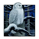 """Snowy Owl in Forest at Night ""January 12  1924"