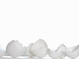 White Egg Shells
