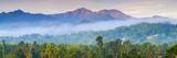 Blue Mountains  Portland Parish  Jamaica  Caribbean