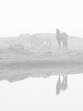 Herd of Horses in the Mist, Iceland Papier Photo par Nadia Isakova