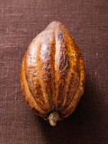 Cacao Pod on Brown Background Papier Photo