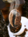 Roasted Coffee Bean (Steaming)