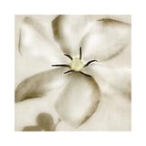 Whisper of Gardenia