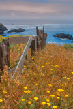 Down by the Sea Ranch