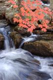 Autumn Stream & Color