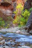 Fall Color in the Virgin Narrows