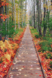 Wild Garden of Acadia Path