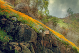 Spring in the Canyon