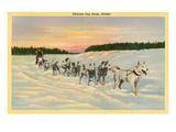Siberian Dog Team  Alaska