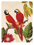 Tropical Red Pair