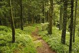 Walking Trail  Hochkopf  Near Schonau  Black Forest  Baden-Wurttemberg  Germany  Europe